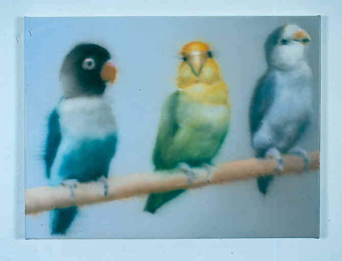 Drei Vögel
