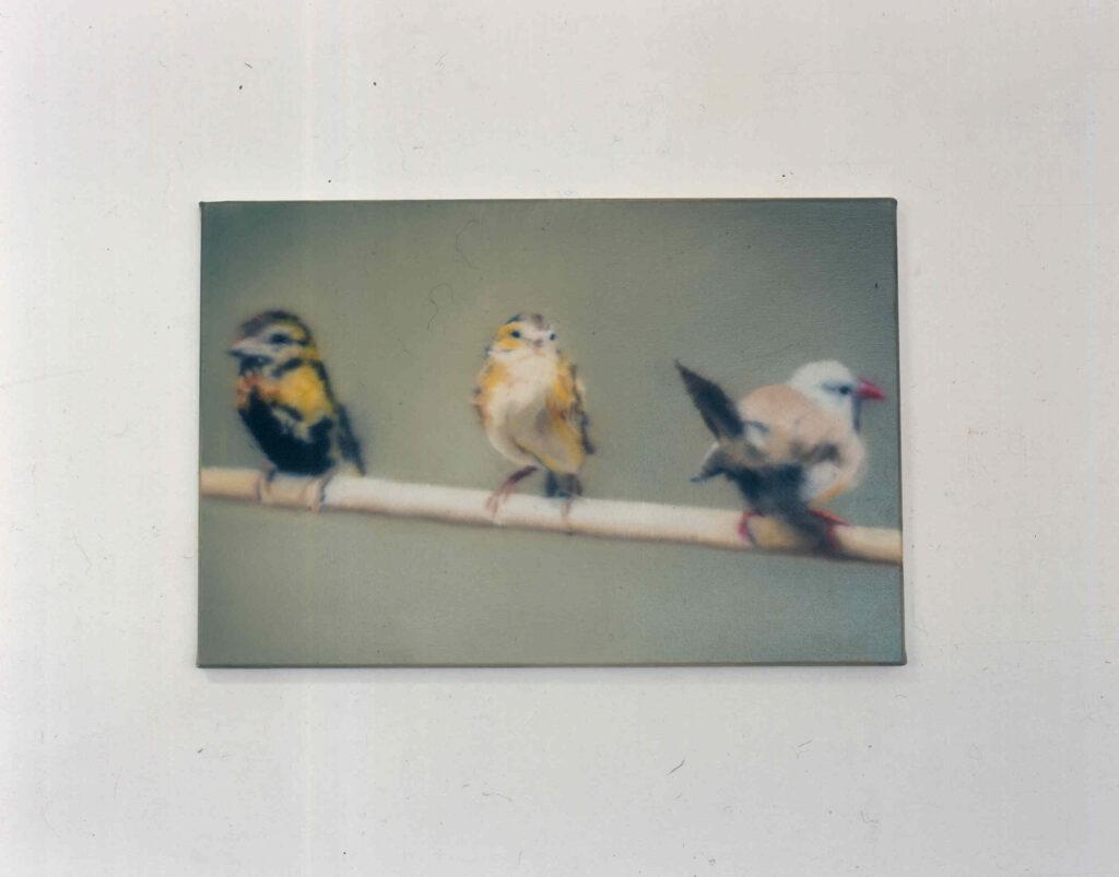 3 Finken