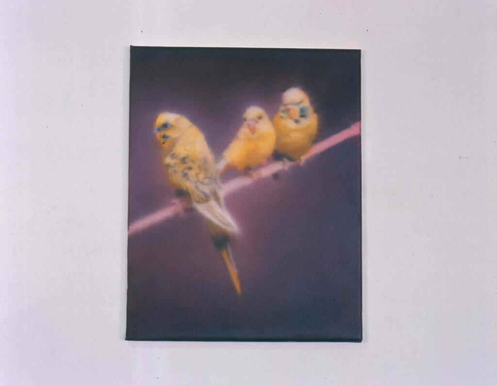3 Gelbe Wellensittiche